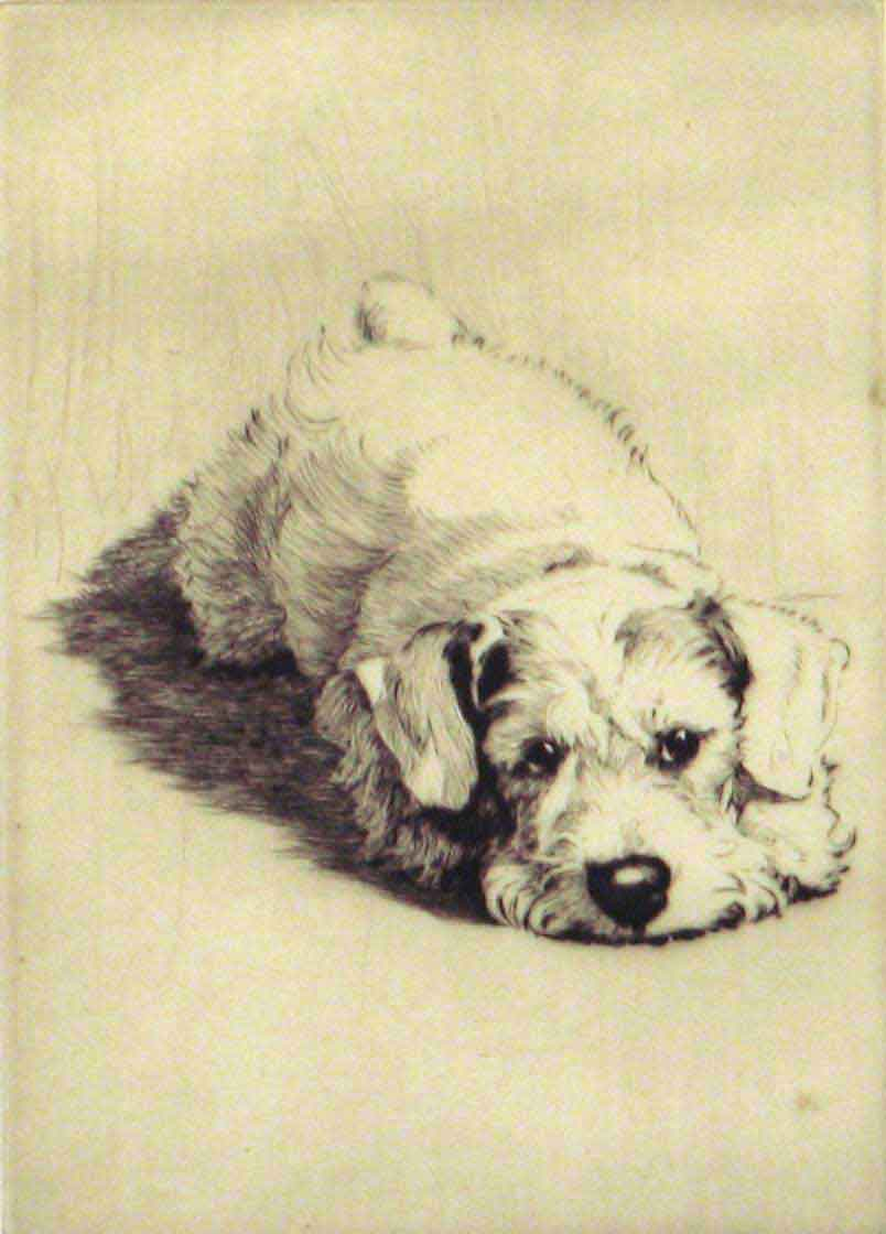 A Sealyham Puppy